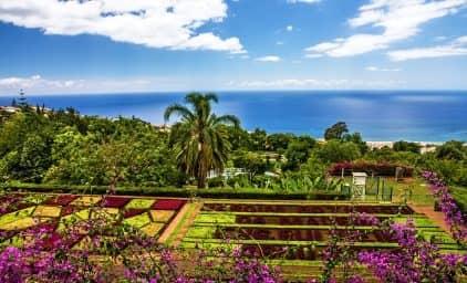 Madeira à la OLIVA