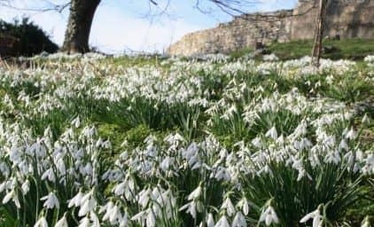 Schneeglöckchen, Wintergärten & Royales in England