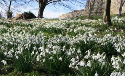 Schneeglöckchen & Wintergärten, England