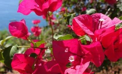 Naturspektakel Madeira & Blumenfest
