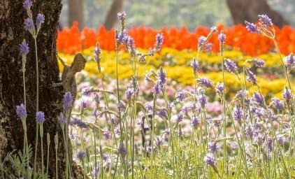 Südafrika - grünes Blumenparadies
