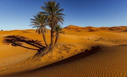 Wüstenzauber & Glanzlichter Südmarokkos