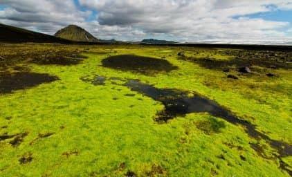 Island - Höhepunkte & Faszinierendes Hochland
