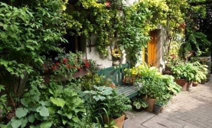 Lady Gardeners im Süden NÖ