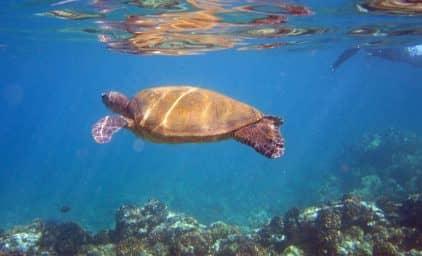 Hawaii - Sehnsuchtsziel