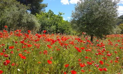 Provence - Genusswandern im Land des Lichts