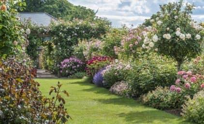 Englische Rosen- und Gartenleckerbissen