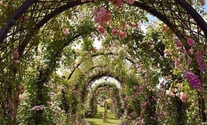 Fest der Rosen, England/Grafschaft Norfolk
