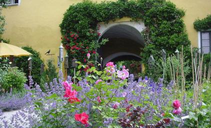 Zur schönsten Rosenblüte nach Altenburg, NÖ