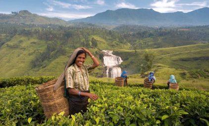 Sri Lanka – Garten Eden im Indischen Ozean