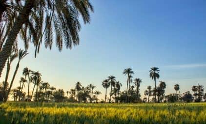 SEKEM – die ägyptische Kraft der Sonne