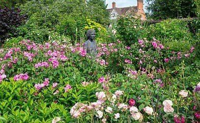 Englische Rosenreise, zur schönsten Rosenblütezeit