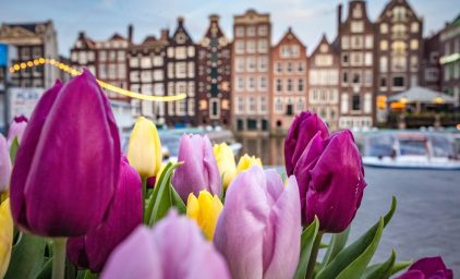 Holland zur Tulpenblüte